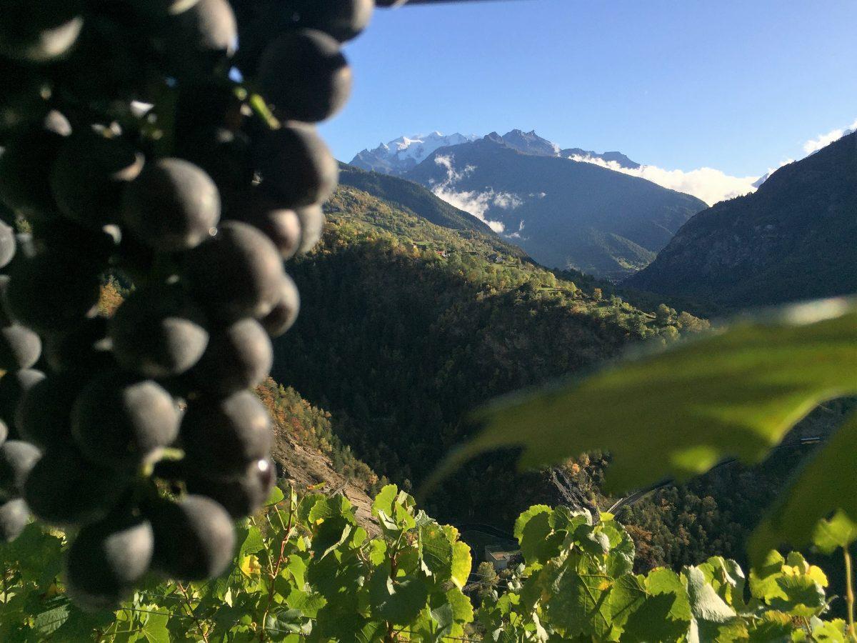 Weintrauben im Schweizer Wallis. Und bestes Wetter beim 360°-Dreh von IntoVR-Autorin Angela Kea.