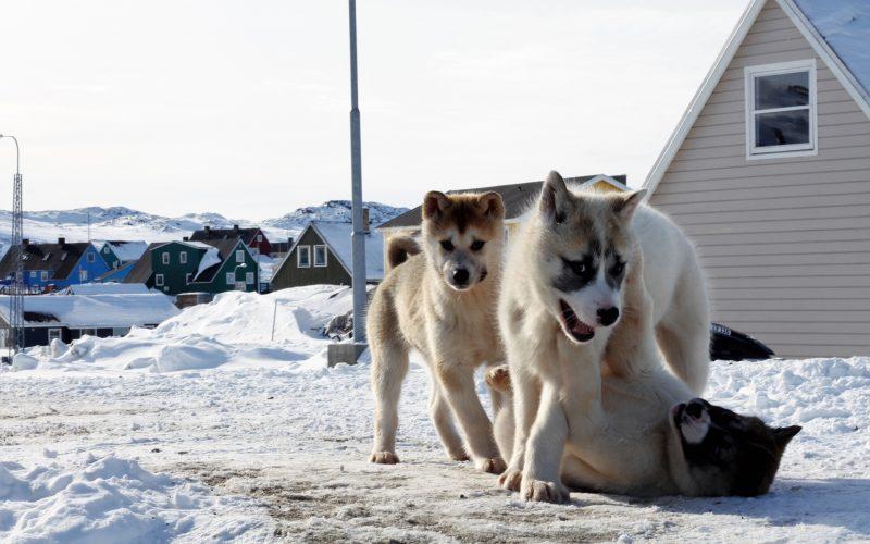 IntoVR 360°-Reportage Grönland