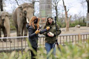 Elefanten in 360°: Dreharbeiten im fast menschenleeren Zoo.